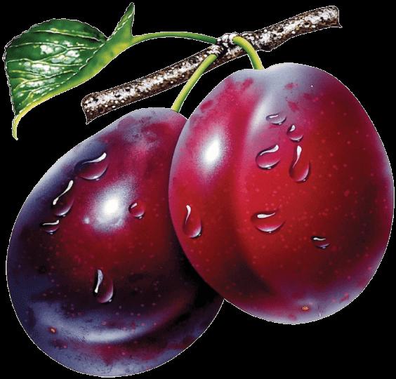 buy dried Prune Plums
